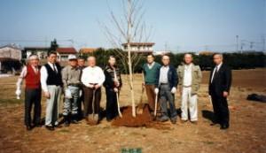 桜の苗木植樹